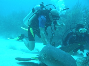 """Playing """"tag"""" with sharks"""