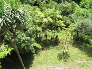 Tropical fauna near caves