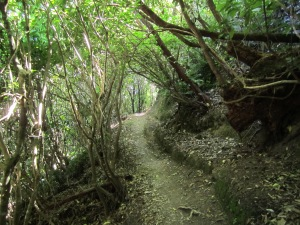 The jungle canopy was complete on this part of the Snout trail in Picton