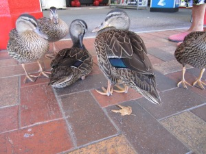 These ducks actually entered a women's clothes store