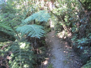 """This Milnthorpe walking track is called """"Trev's Trek."""" and is where I began my hike."""