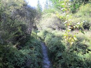 Still on Trev's Trek, walking along the Parapara Inlet from Golden Bay.