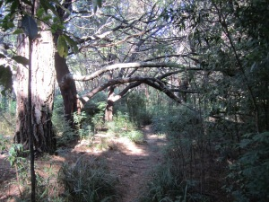 Rata tree branches line the Pakihi Path track of Milnthorpe.