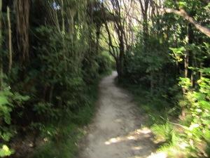 Wainui Falls bush cover.