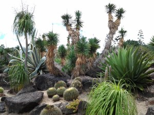 """Cactus and other """"dry"""" species you might find in Arizona."""