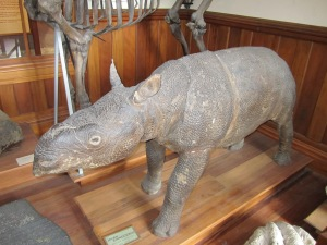 Extinct Rhino.