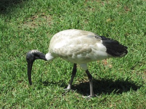 Weird looking bird with a sharp thin beak.