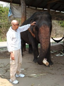 Elephant in town of Pai, which is being humanely treated and cared for (albeit, it was rescued from one of the abusive operations in Thailand).