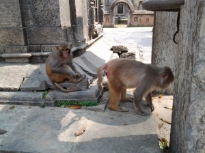Monkeys near the votive shrines.