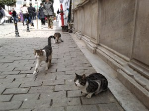 In Nepal, Thailand, and Malaysia, it's dogs that run loose. In Turkey, it's cats. Lots of them!