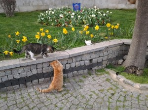 Even the cats suspected that I was lost.