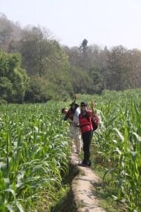 """Onward Christian Soldiers"" through a corn field."