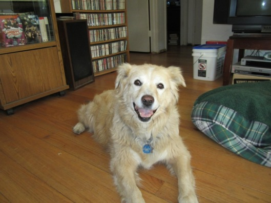 One of the last photos I have of Shasta. Her leg was already amputated, but for her, she could care less. She was a very a happy dog and nothing ever got her down.