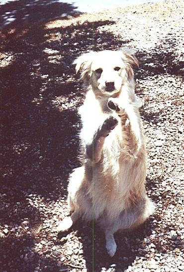 """Shasta would do her """"beg"""" trick on command (especially when a treat was involved)."""
