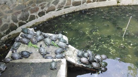 Hundreds of turtles at the Pagoda. Seemed a bit too crowded for my tastes.