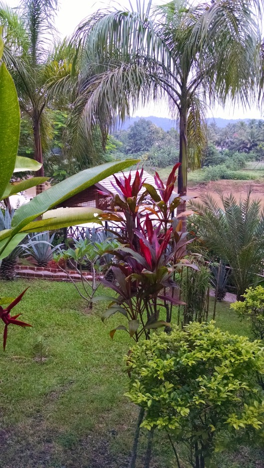 Gardens at Thongbay Guesthouse, where I stayed in Luang Prabang.