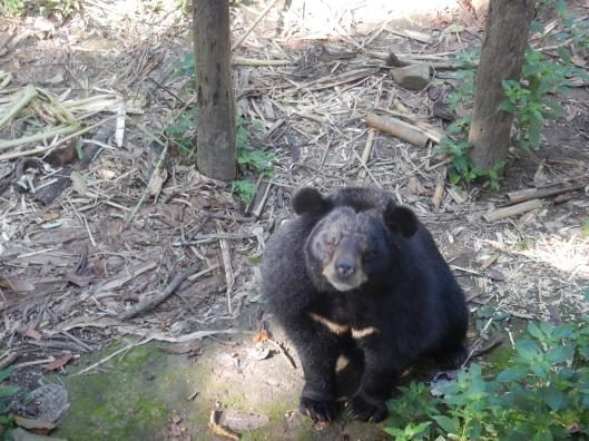 Cuddly black bear.
